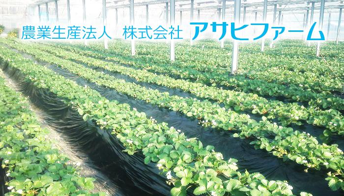 農業生産法人 株式会社アサヒファーム